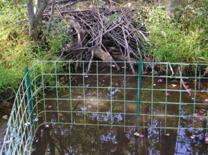 Get Beaver Proof Culverts Using Keystone Fences Beaver