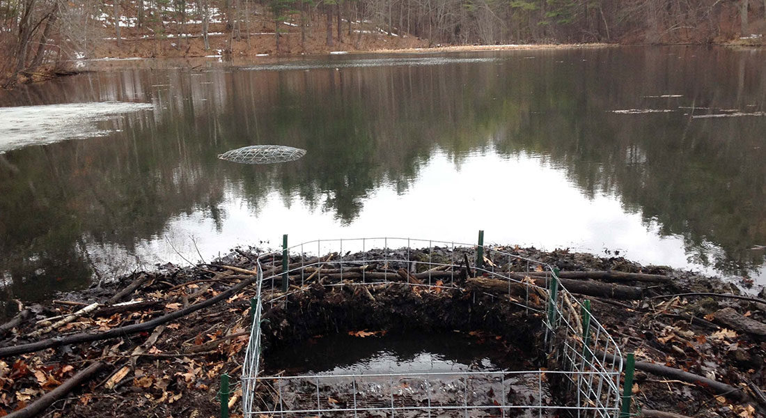Blocked Drains Need Beaver Proof Culverts from BeaverSolutions.com