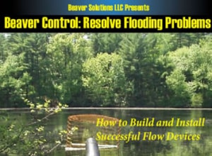 Beaver Solutions LLC, beavers, beaver problems, beaver dams, culvert protection, beaver management, beaver trapping, beaver problems, beaver issues, Massachusetts, MA, CT, NY, NH, VT, RI, Southern New England